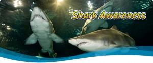 shark-awareness