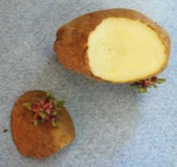 PotatoCut-254x240